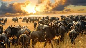 7 Days Tanzania Safaris - Lake Manyara, Lake Eyasi, Ngorongoro Conservation Area, Serengeti and Empakai Crater
