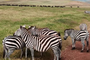 6 Days safaris - Manyara, Ngorongoro and Serengeti Safaris