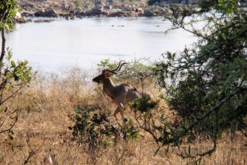 8 Days Tanzania Safaris Lake Manyara, Lake Eyasi, Ngorongoro Conservation Area, Serengeti, Empakai Crater
