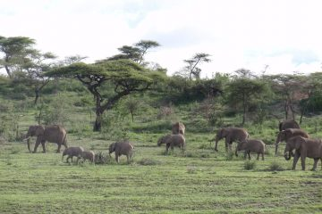 5 Days Tarangire, Manyara and Ngorongoro safaris