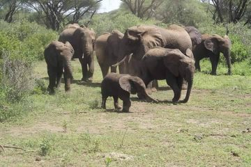 4 Days safaris - Tarangire, Ngorongoro and Serengeti Safaris