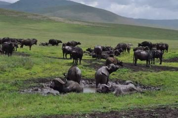 3 Days Tarangire, Manyara and Ngorongoro safaris