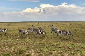 9Days Tanzania safaris Manyara, Serengeti, Ngorongoro and Lake Eyasi